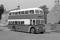 BUF276C Weardale,Frosterley Southdown MS