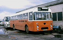 JHA226L Burman,Mile Oak Midland Red(BMMO)