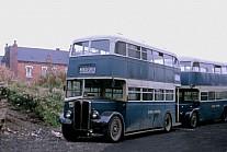 GWY157 Ledgard,Armley Felix,Hatfield