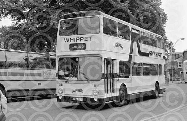EAV811V Whippet,Fenstanton
